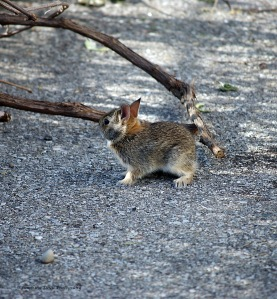 Rabbit 3